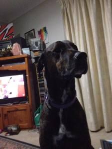 Barney the Supervisor