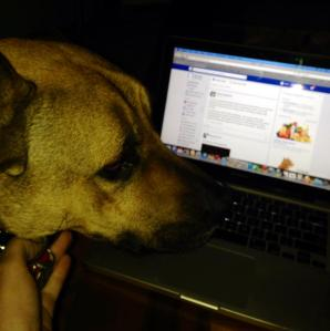 Brutus on laptop