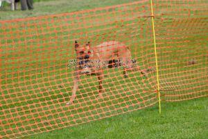 Brutus fence breaker Aug 2014