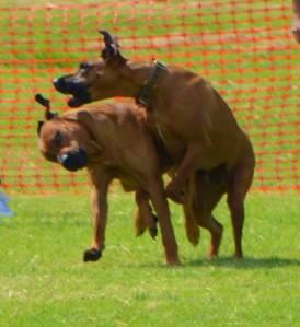 Mac and Bailey playing