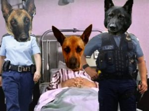 Brutus and the cops