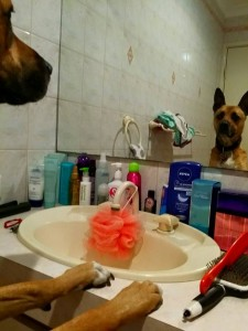 Dog in the mirror